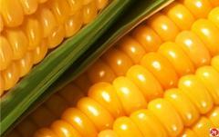 Кукурузное масло первого холодного отжима