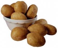 Картофель кормовой Винница, продажа