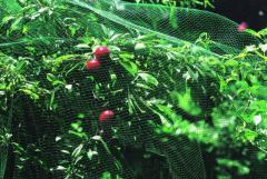 Grid protection against birds of ORTOFLEX green,
