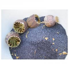 Семена голубого Мака