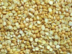 Yellow polished split peas