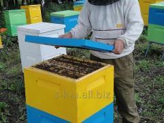 Beehives, Ukraine
