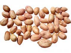 Peanut crude bol