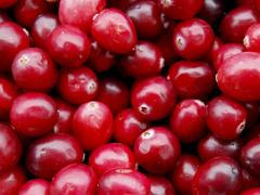 The cranberry is fresh