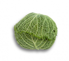 Seeds of savoy cabbage