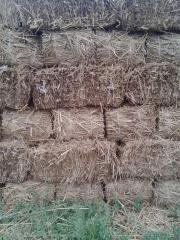 Cooley Reed 35 * 40 * 80cm
