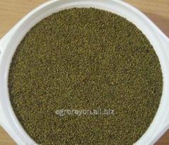 Seeds of lucerne