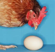 Яйця инкубационные курей породы Мастер, Редбро ,