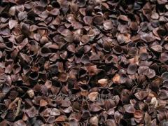Pod (peel) of a buckwheat cleared Luhansk