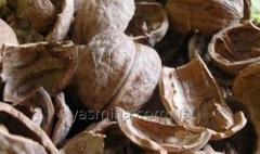 The shell walnut