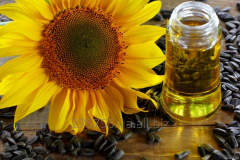 The sunflower oil refined, not refined for export