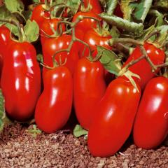 Tomato a slivka, for preservation and a