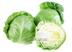 Cabbage of a b_lokachann