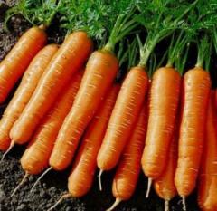 Carrots seeds Artek