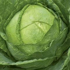 Cabbage seeds Amager
