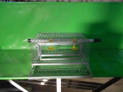 Cage for keeping of quails