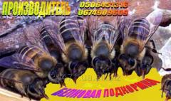 Соевая мука для подкормки пчёл