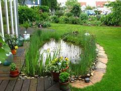 Растения для искусственных прудов