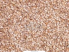 Ядро семян подсолнечника кондитерское