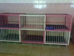 Cage for keeping of cats, doggies