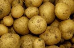 Картофель столовый, сортовой семенной,