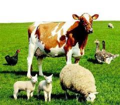 Витамины и аминокислоты Интровит для с/х животных