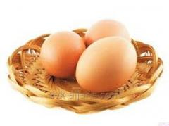 Chicken eggs red