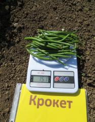 Croquet / kroket - asparagus haricot, clause of