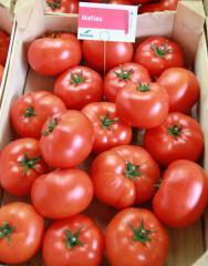 Mathias f1/matias f1 - a tomato indeterminantny,