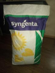 Sunflower seeds hybrid, sowing material. Syngenta,