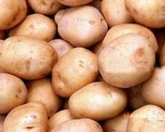 Картофель столовый оптом
