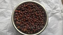 Плоды шиповника (Rosa canina, Fructus)