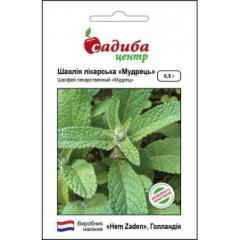 Sage / salvia — a grass plant, hem zaden (a sadyba