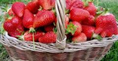 Розсада полуниці
