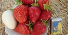 Strawberry saplings Anablank's grade in the