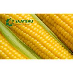 Кукуруза Агральп 200 (ФАО 280)