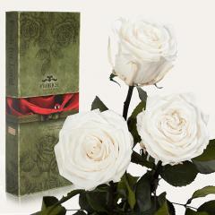 Три долгосвежие розы Florich в подарочной упаковке. Белый Бриллиант 5 карат, средний стебель