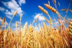 Mąka pszenna, olej słonecznikowy, siemię lniane,