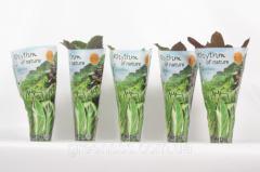 Hyacinth east mix - Hyacinthus orientalis mixed