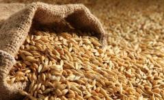 Wheat flour of 1 grade