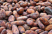 Cocoa beans crude 100 g Ghana