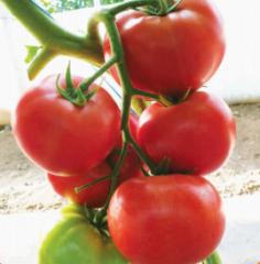 Raspberry f1/malinka star f1 – a tomato