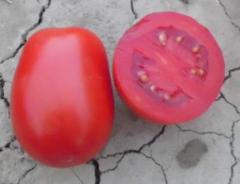 Leonerosso f1/leonerosso f1 – a tomato
