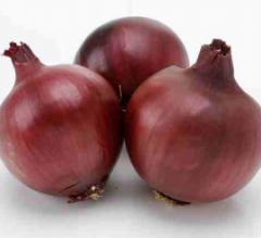 Fiamma f1/fiamma f1 – onion, cora seeds of 250 000