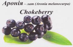 Rowan berries black (chokeberry), frozen