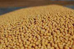 Семена сои сорт Ворскла