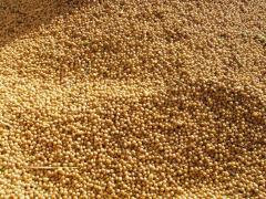 Семена сои Муза