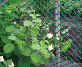 Fences for giving, garden protections, a grid the