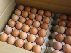 Selling chicken egg white and brown.