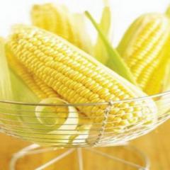 Семена кукурузы Вондерленд F1 Agri Saaten...